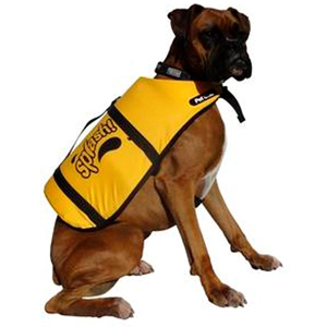 dog in lifejacket